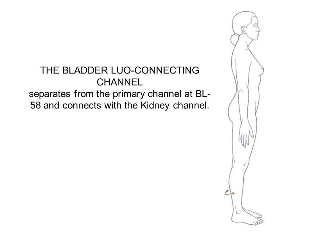 THE BLADDER LUO-CONNECTING CHANNEL separates from the primary channel at BL- 58 and connects with the Kidney channel.