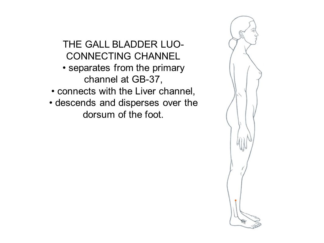 THE GALL BLADDER LUO- CONNECTING CHANNEL separates from the primary channel at GB-37, connects with the Liver channel, descends and disperses over the
