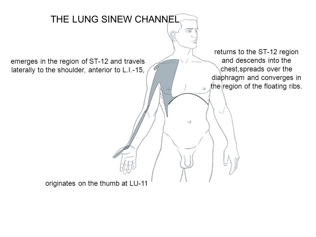 THE LUNG SINEW CHANNEL originates on the thumb at LU-11 emerges in the region of ST-12 and travels laterally to the shoulder, anterior to L.I.-15, ret