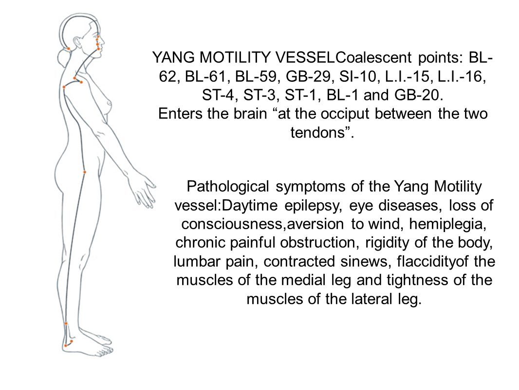 """YANG MOTILITY VESSELCoalescent points: BL- 62, BL-61, BL-59, GB-29, SI-10, L.I.-15, L.I.-16, ST-4, ST-3, ST-1, BL-1 and GB-20. Enters the brain """"at th"""