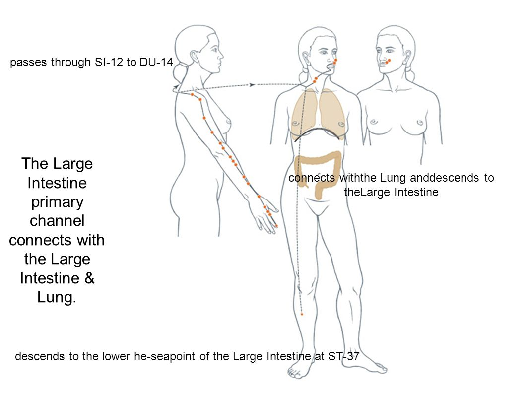 The Small Intestine luo- connecting channel separates from the Small Intestine channel at SI-7 and connects with the Heart channel, connects with the shoulder at L.I.- 15