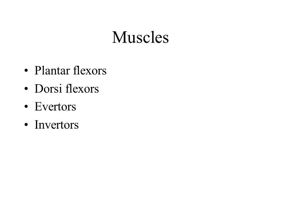 Muscles Plantar flexors Dorsi flexors Evertors Invertors