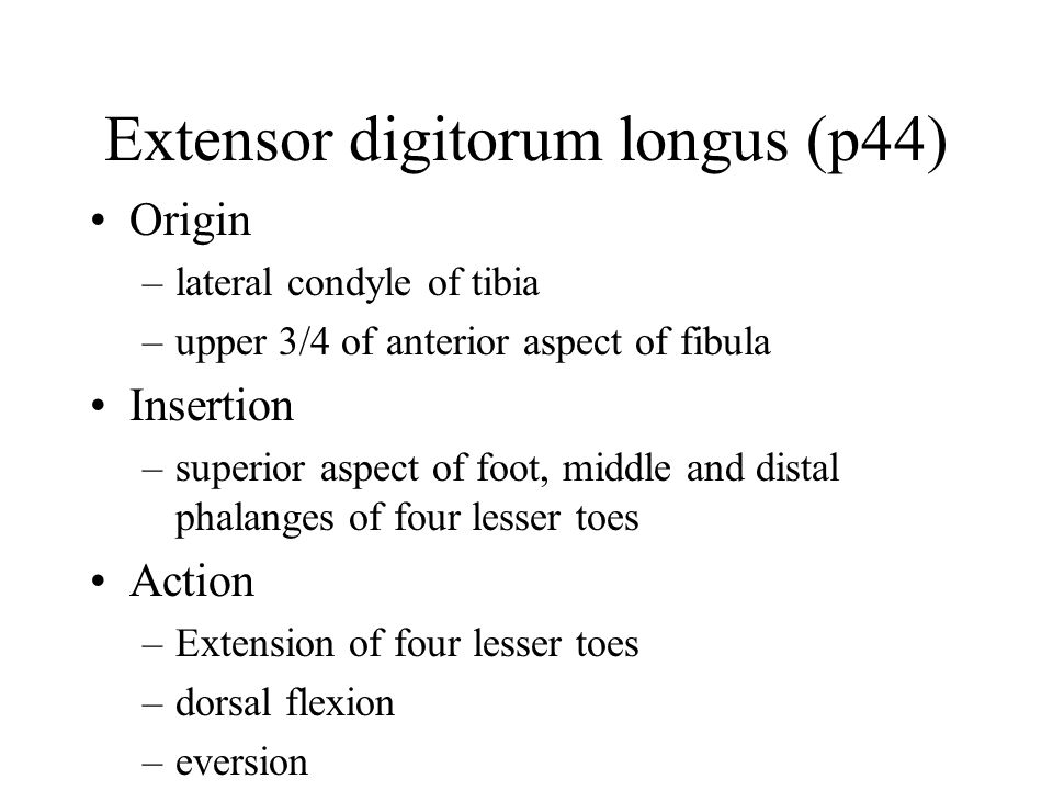 Extensor digitorum longus (p44) Origin –lateral condyle of tibia –upper 3/4 of anterior aspect of fibula Insertion –superior aspect of foot, middle and distal phalanges of four lesser toes Action –Extension of four lesser toes –dorsal flexion –eversion