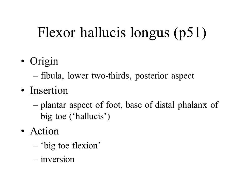 Flexor hallucis longus (p51) Origin –fibula, lower two-thirds, posterior aspect Insertion –plantar aspect of foot, base of distal phalanx of big toe ('hallucis') Action –'big toe flexion' –inversion