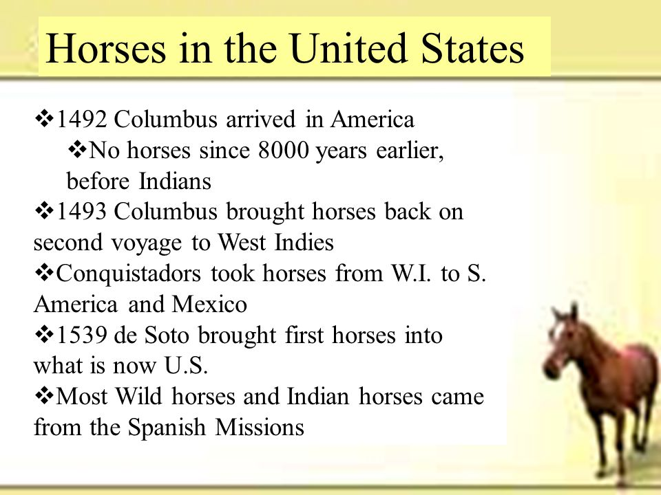 Horses in the United States  1492 Columbus arrived in America  No horses since 8000 years earlier, before Indians  1493 Columbus brought horses bac