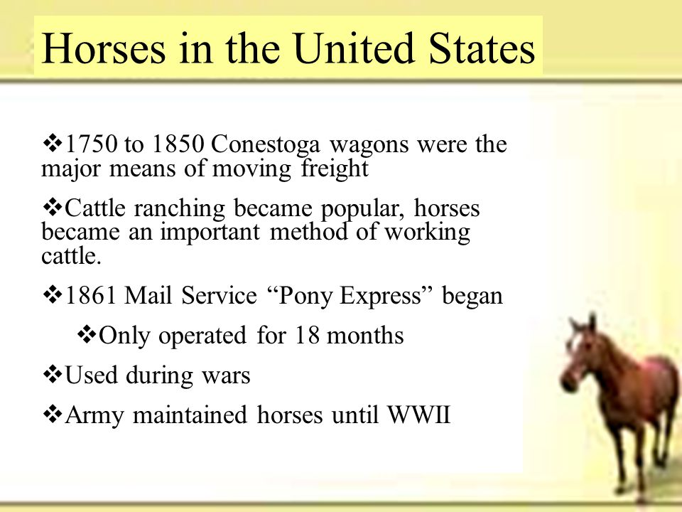 Horses in the United States  1750 to 1850 Conestoga wagons were the major means of moving freight  Cattle ranching became popular, horses became an