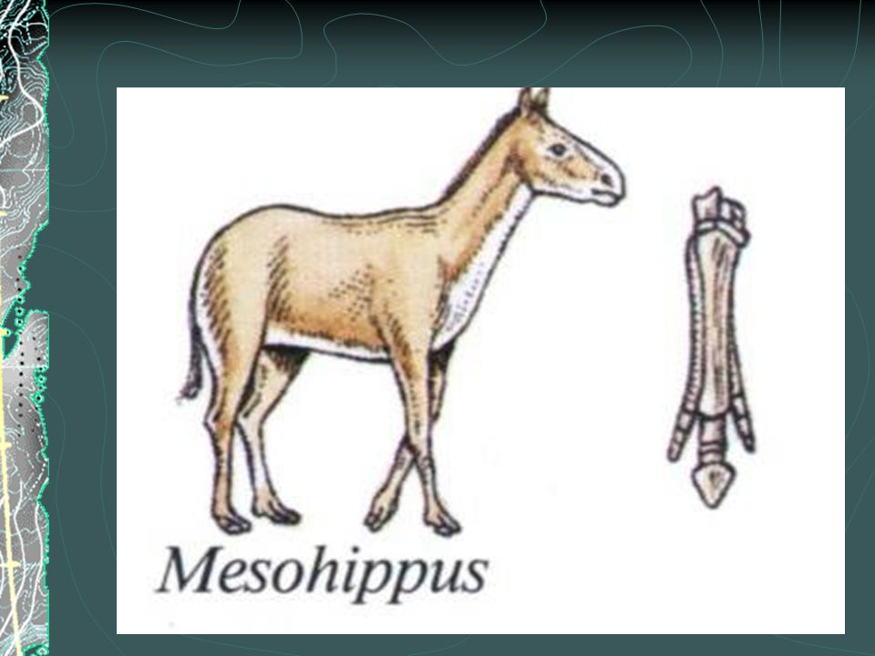 Uses of the Horse and Inventions  Egyptians  1680 BC Dynasty of Shepherd Kind  Invention of chariot  Replaced Asses  Egyptians had a large responsibility for the spread of domesticated horse  100BC Greece  Siege of Troy  Developed the snaffle bit
