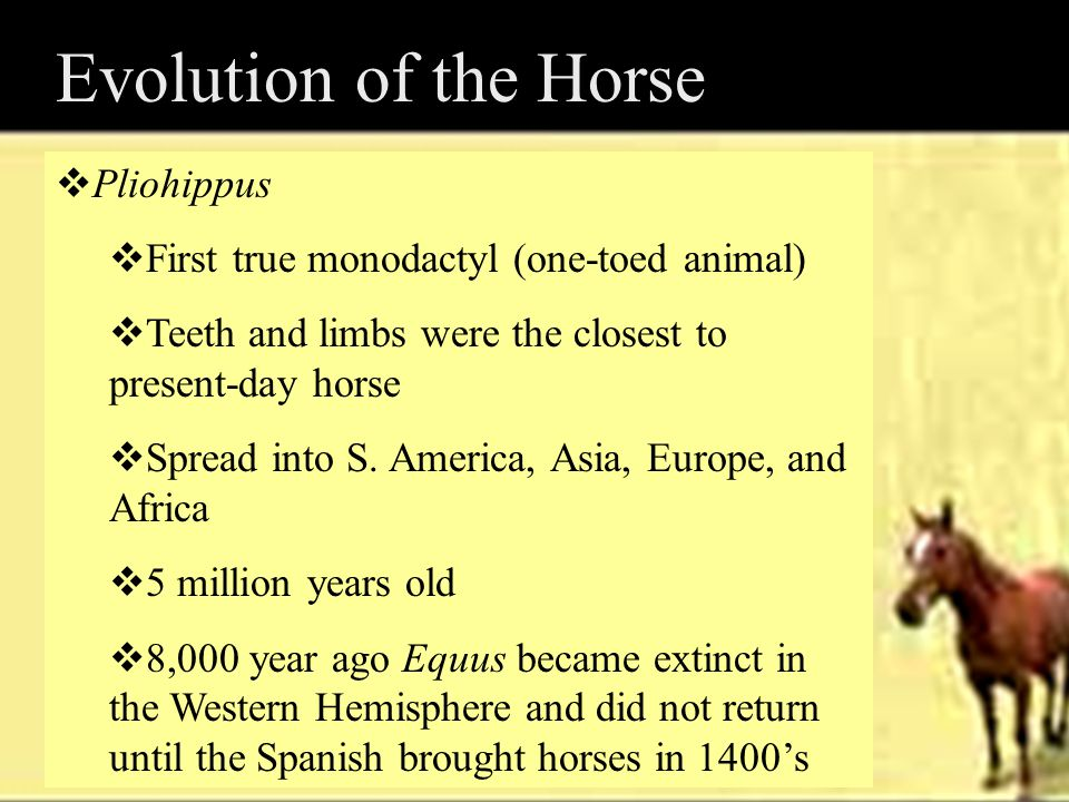 Horses in the United States  1600's Indians began riding horses  How did horses change the Indians way of life .