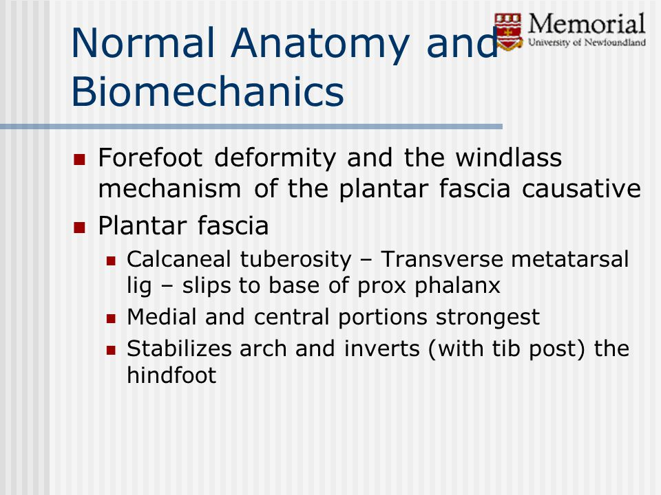 Normal Anatomy and Biomechanics Forefoot deformity and the windlass mechanism of the plantar fascia causative Plantar fascia Calcaneal tuberosity – Transverse metatarsal lig – slips to base of prox phalanx Medial and central portions strongest Stabilizes arch and inverts (with tib post) the hindfoot