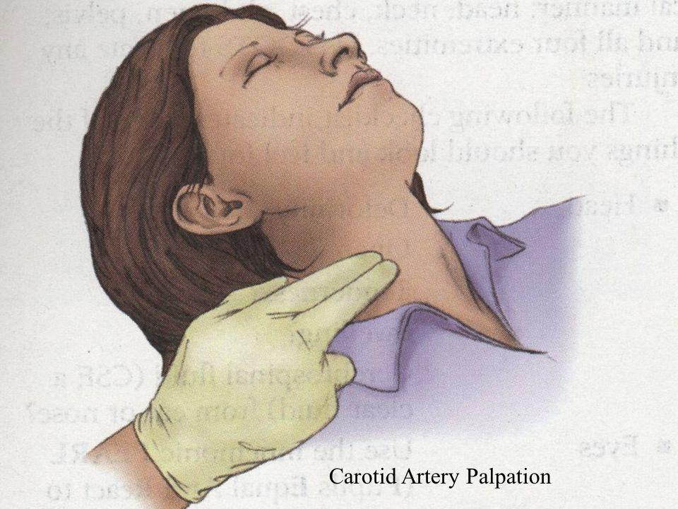Primary Assessment: Assess Responsiveness AVPU Scale A Alert V Verbal P Pain U Unresponsive