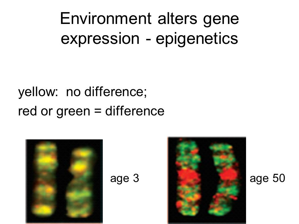 Environment alters gene expression - epigenetics yellow: no difference; red or green = difference age 3age 50