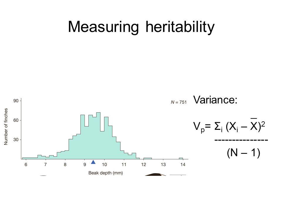 Measuring heritability Variance: _ V p = Σ i (X i – X) 2 --------------- (N – 1)