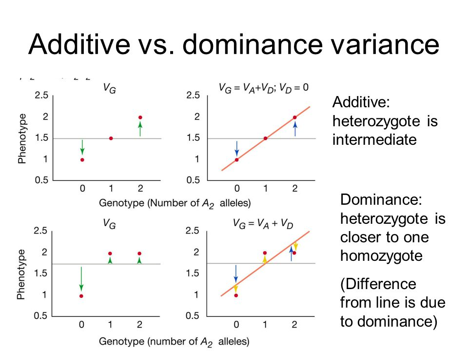 Additive vs. dominance variance Additive: heterozygote is intermediate Dominance: heterozygote is closer to one homozygote (Difference from line is du