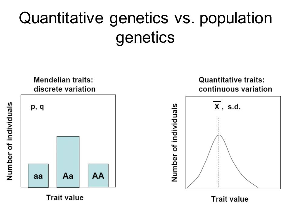 Quantitative genetics vs. population genetics