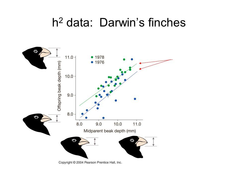 h 2 data: Darwin's finches
