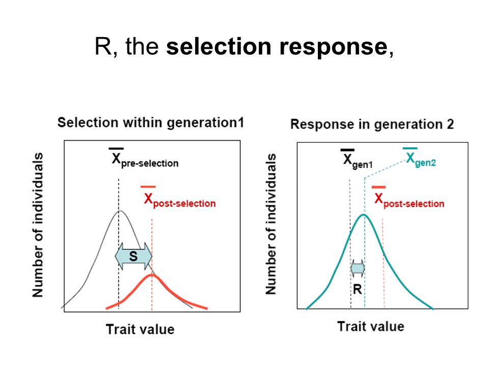 R, the selection response,