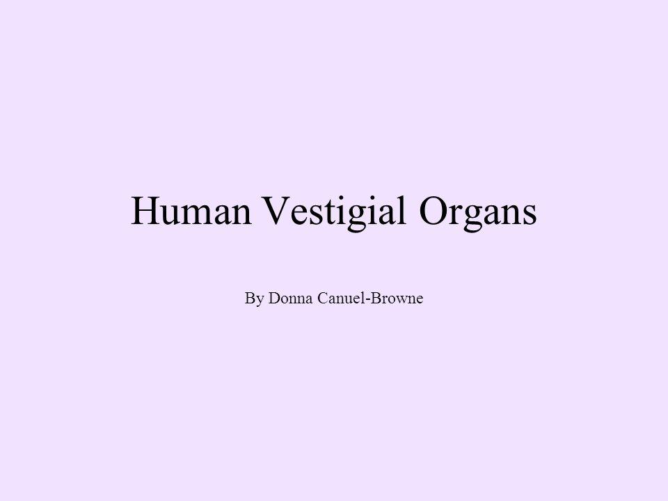 Human Vestigial Organs By Donna Canuel-Browne