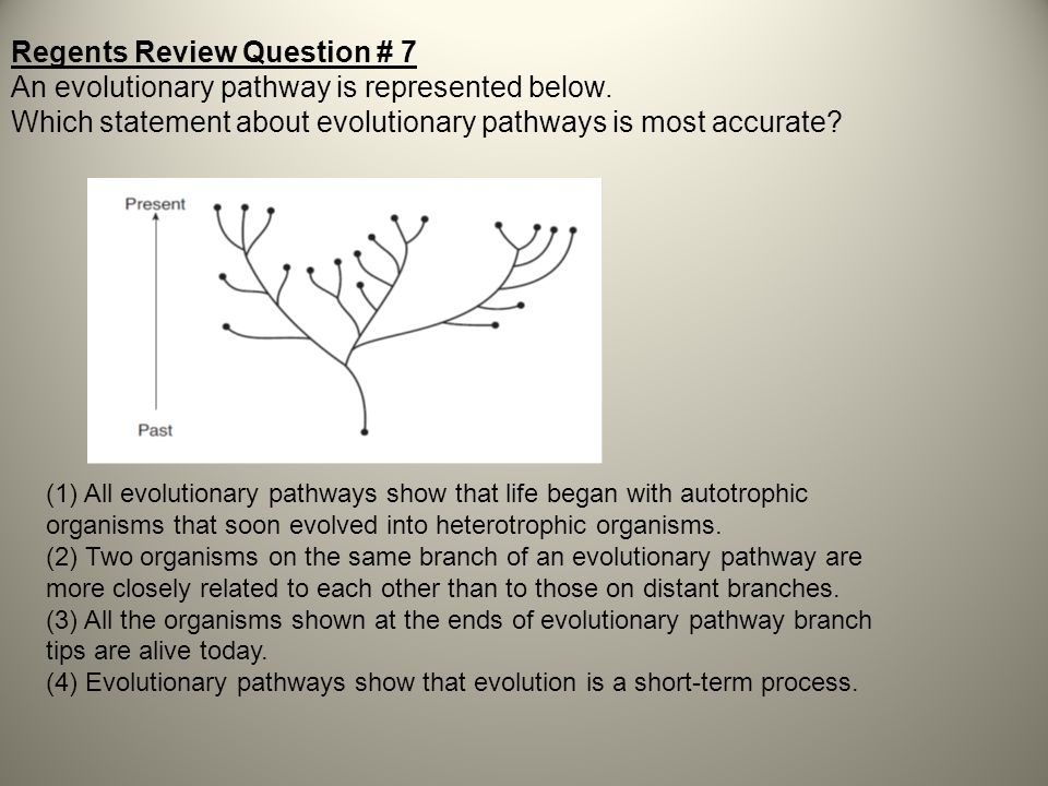 Regents Review Question # 7 An evolutionary pathway is represented below. Which statement about evolutionary pathways is most accurate? (1) All evolut