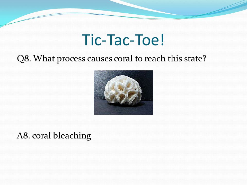 Tic-Tac-Toe! Q8. What process causes coral to reach this state? A8. coral bleaching