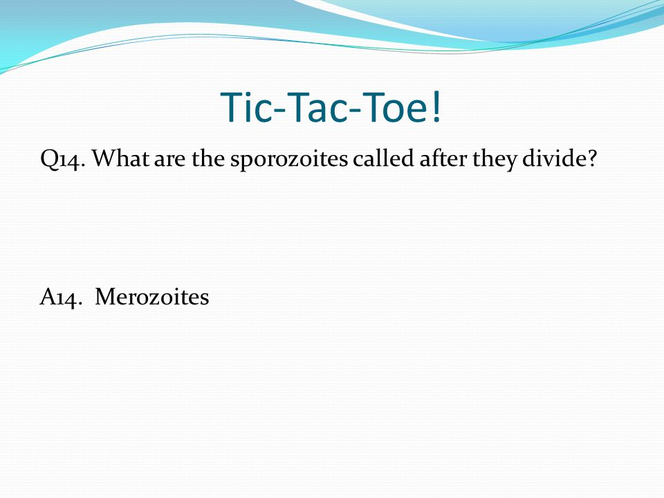 Tic-Tac-Toe! Q14. What are the sporozoites called after they divide? A14. Merozoites