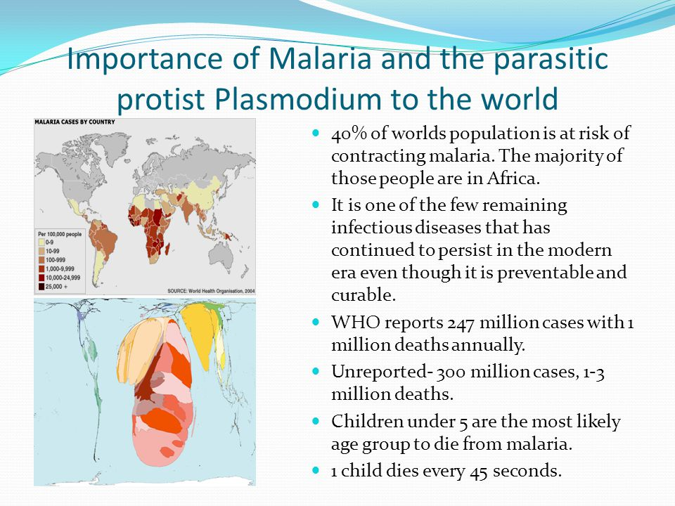Importance of Malaria and the parasitic protist Plasmodium to the world 40% of worlds population is at risk of contracting malaria. The majority of th