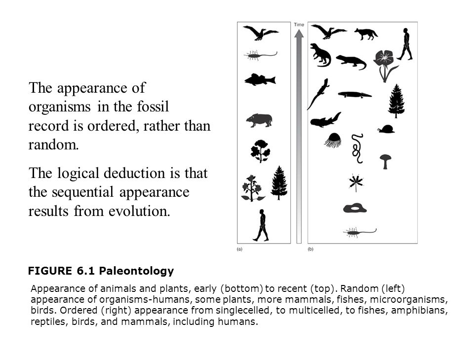 FIGURE 6.1 Paleontology  Appearance of animals and plants, early (bottom) to recent (top). Random (left) appearance of organisms-humans, some plants,