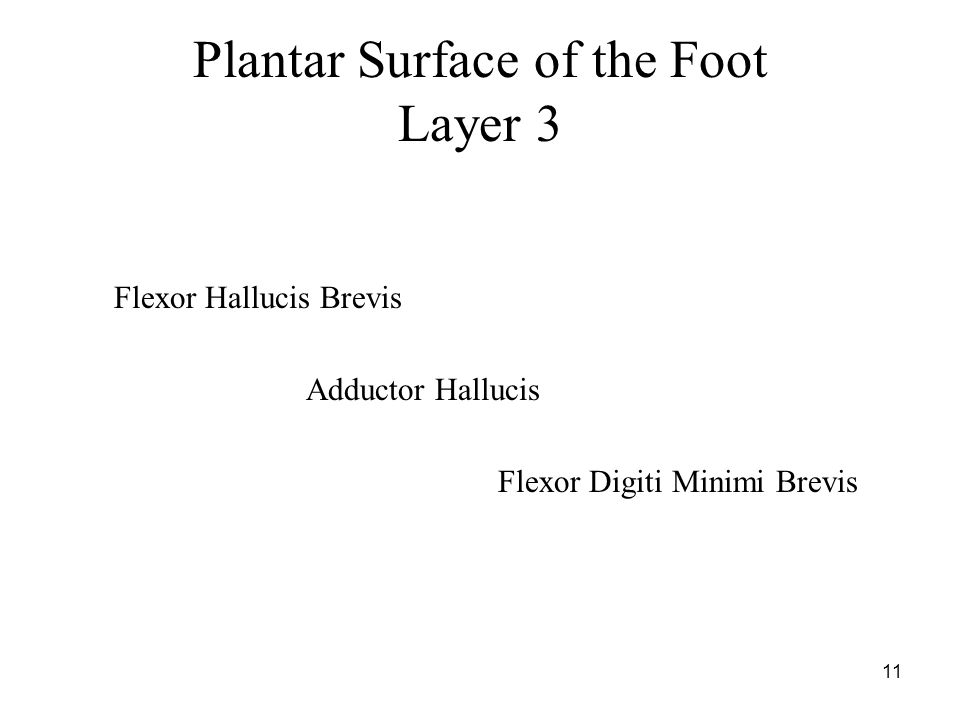 11 Plantar Surface of the Foot Layer 3 Flexor Hallucis Brevis Adductor Hallucis Flexor Digiti Minimi Brevis