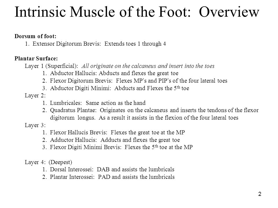 3 Extensor Digitorum Brevis Extensor Hallucis Brevis O: Dorsal surface of calcaneus I: Top of toes 1 – 4 A: Extends toes 1-4 N: Deep peroneal nerve