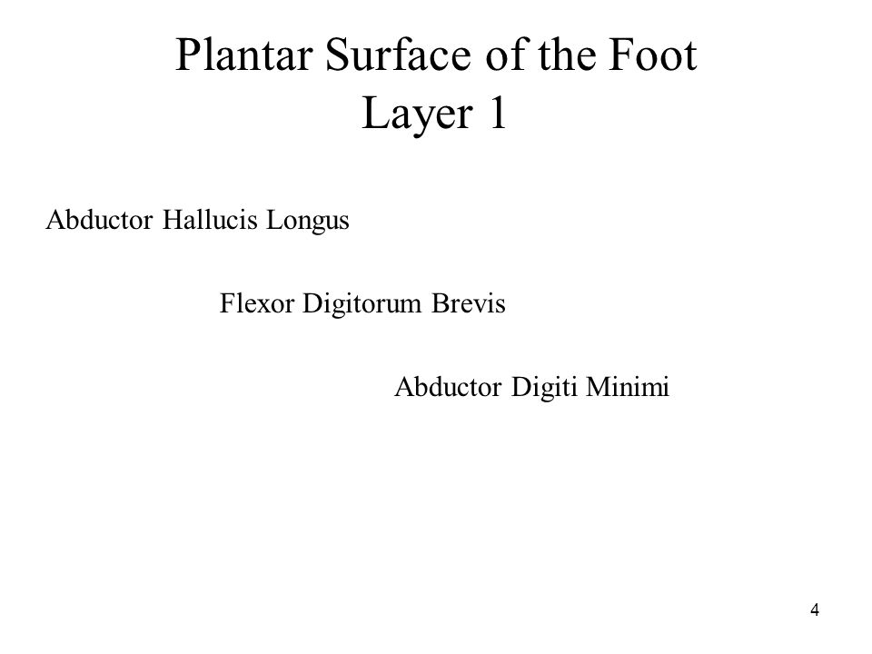 4 Plantar Surface of the Foot Layer 1 Abductor Hallucis Longus Flexor Digitorum Brevis Abductor Digiti Minimi
