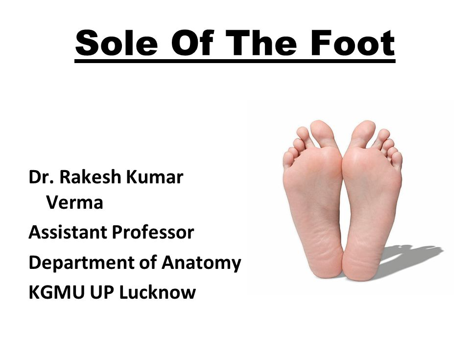Sole Of The Foot Dr. Rakesh Kumar Verma Assistant Professor Department of Anatomy KGMU UP Lucknow