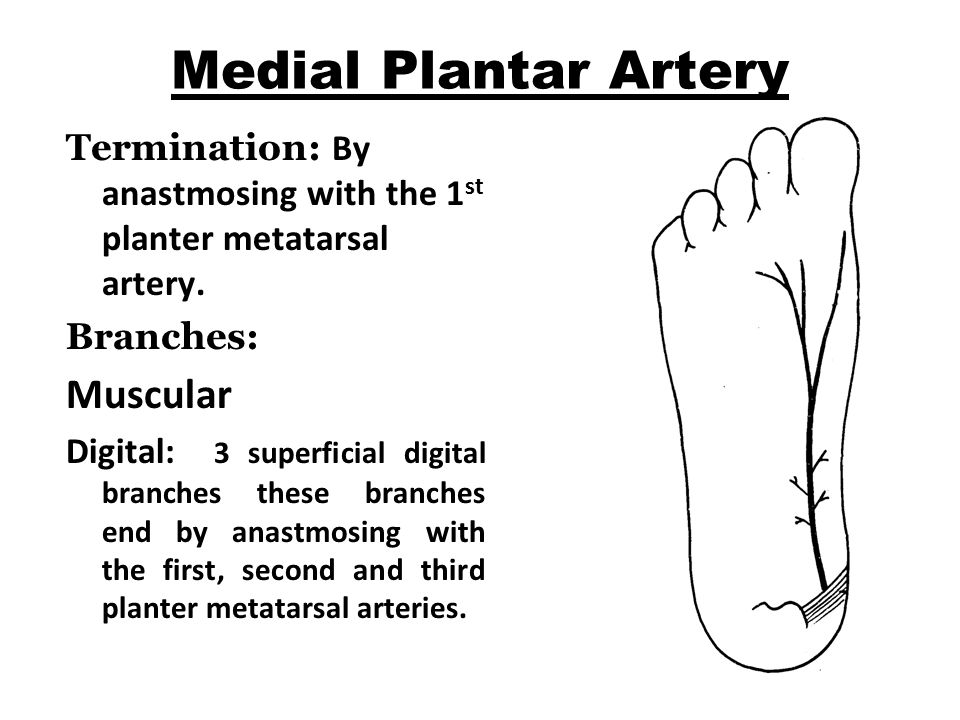 Medial Plantar Artery Termination: By anastmosing with the 1 st planter metatarsal artery.