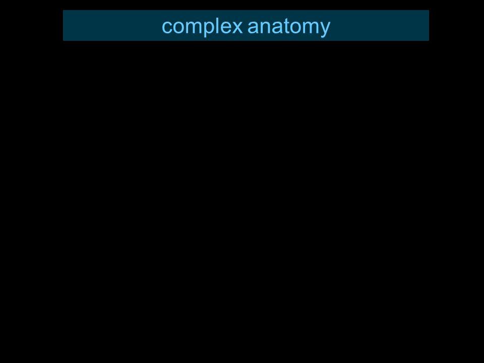 complex anatomy