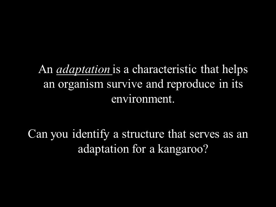 An adaptation is a characteristic that helps an organism survive and reproduce in its environment. Can you identify a structure that serves as an adap