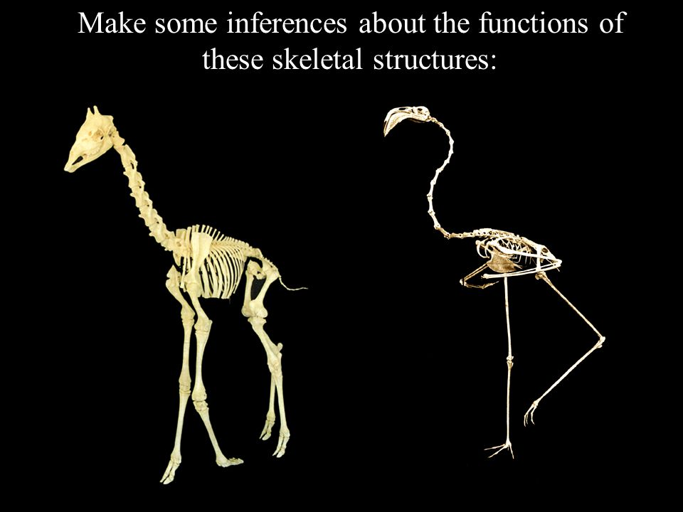Make some inferences about the functions of these skeletal structures: