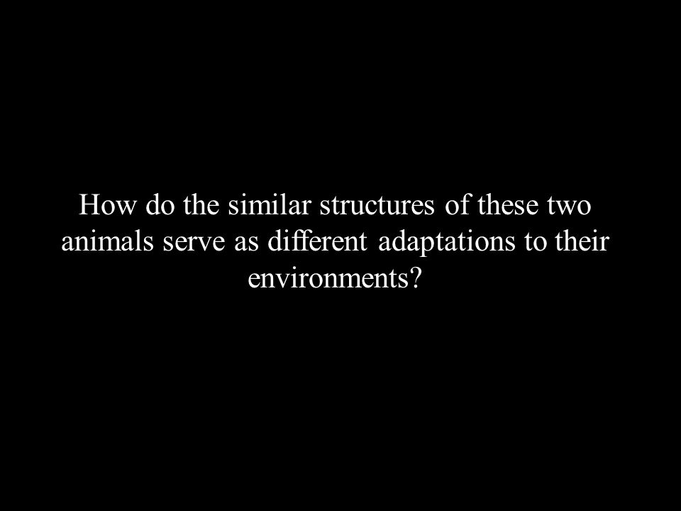 How do the similar structures of these two animals serve as different adaptations to their environments