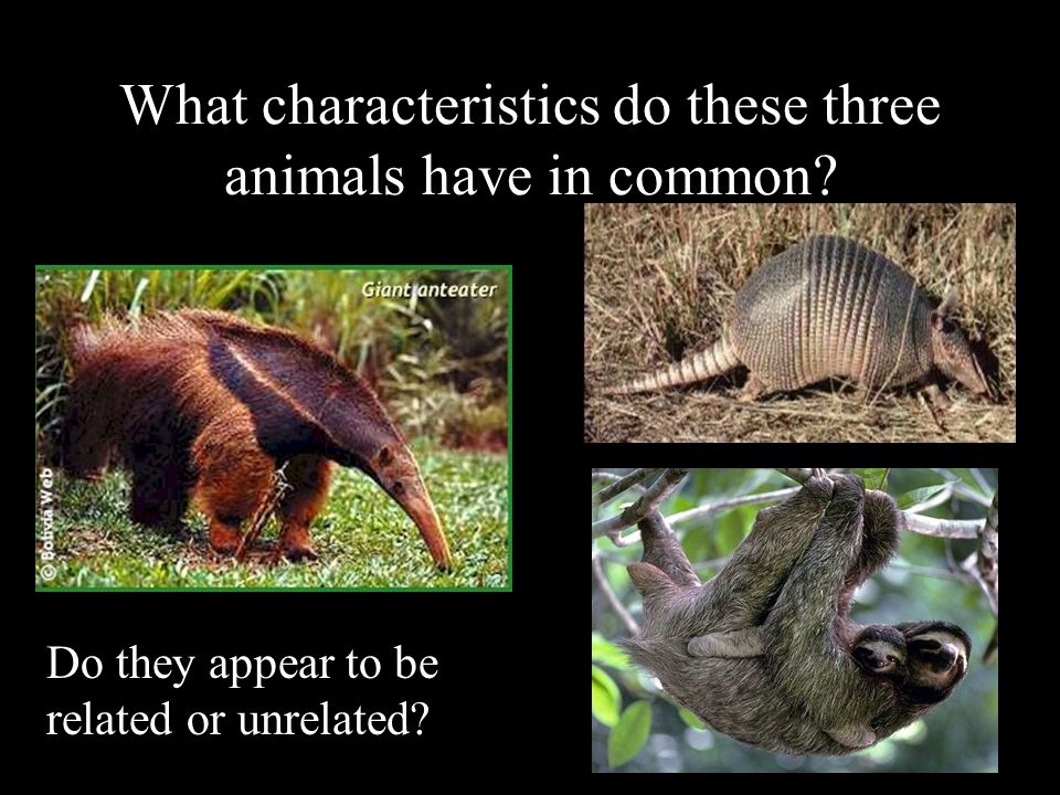 What characteristics do these three animals have in common? Do they appear to be related or unrelated?