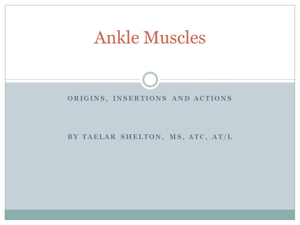 ORIGINS, INSERTIONS AND ACTIONS BY TAELAR SHELTON, MS, ATC, AT/L Ankle Muscles