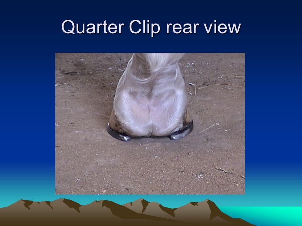 Quarter Clip rear view