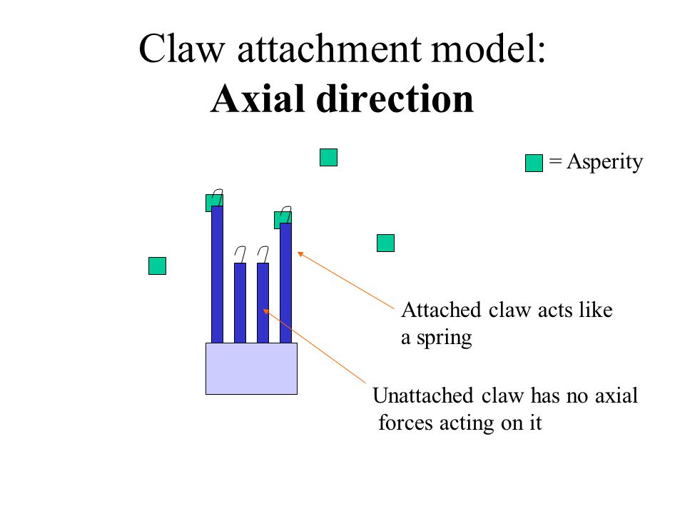 Claw attachment model: Axial direction = Asperity Attached claw acts like a spring Unattached claw has no axial forces acting on it