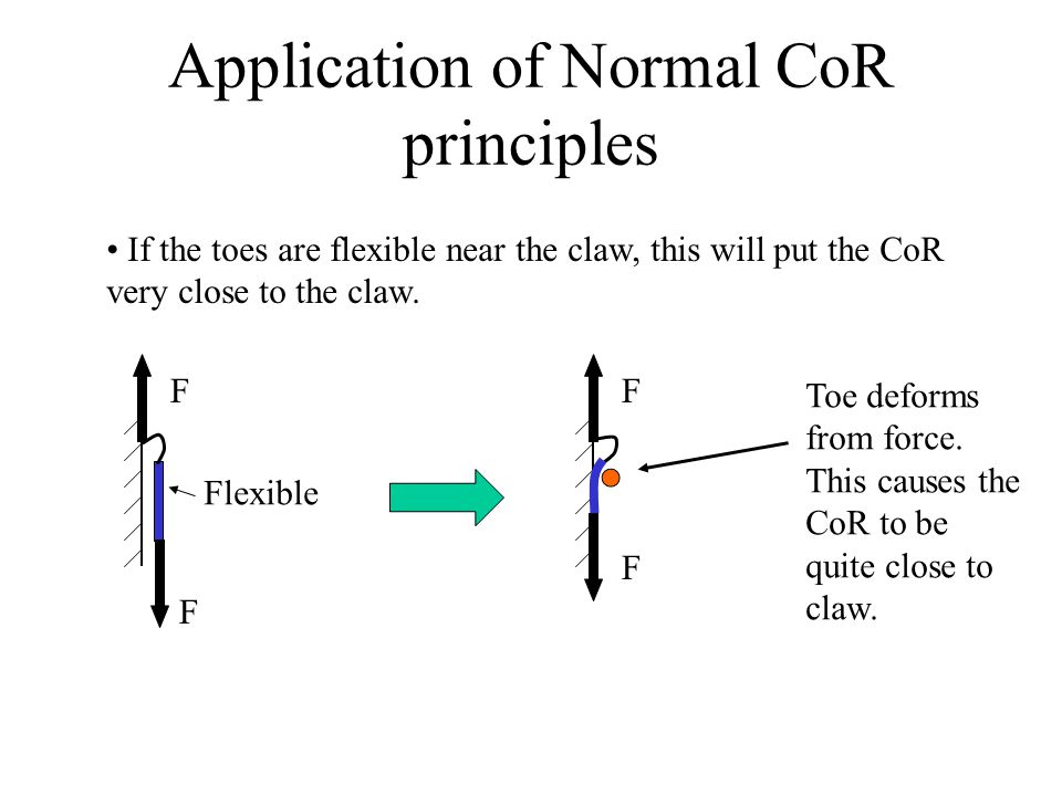 Application of Normal CoR principles If the toes are flexible near the claw, this will put the CoR very close to the claw.