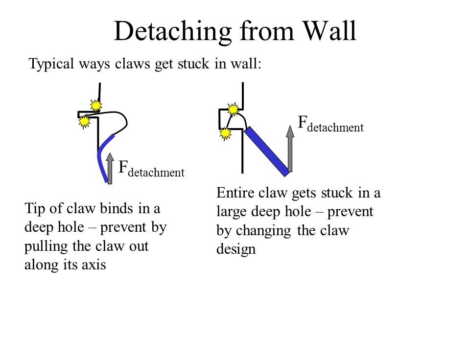 Detaching from Wall Typical ways claws get stuck in wall: F detachment Entire claw gets stuck in a large deep hole – prevent by changing the claw design F detachment Tip of claw binds in a deep hole – prevent by pulling the claw out along its axis