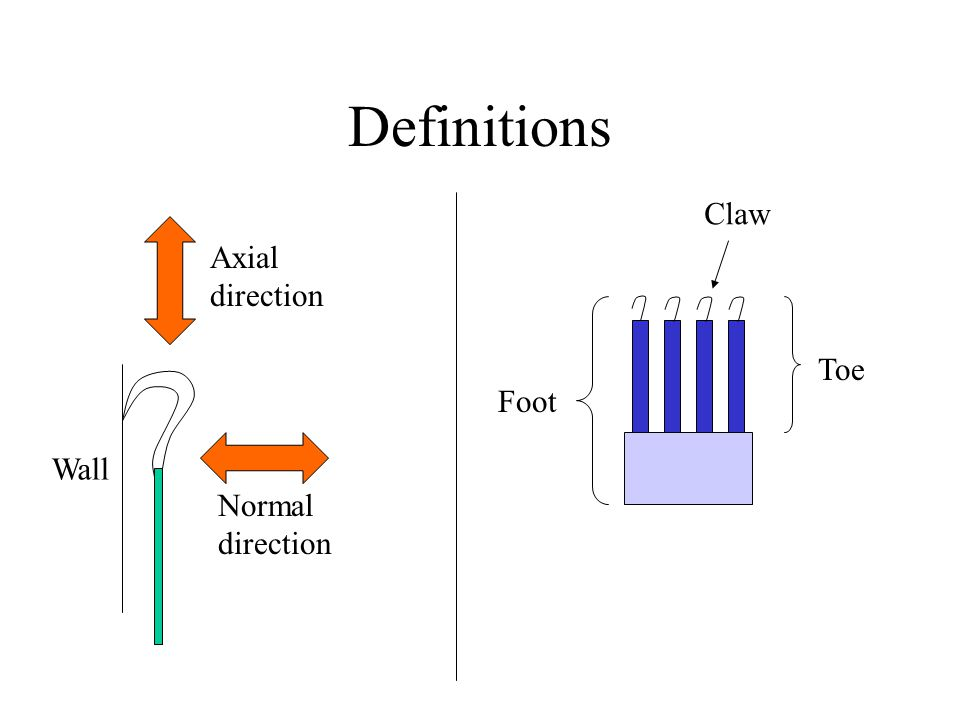 Definitions Wall Normal direction Axial direction Toe Foot Claw