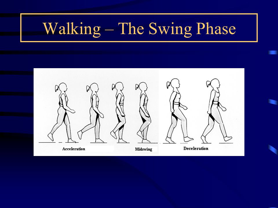 Gait changes with normal ageing Generally, they try to improve stability by the following adjustments: Shorter step and stride lengths lower walking speeds greater variation in stride width wider base of support