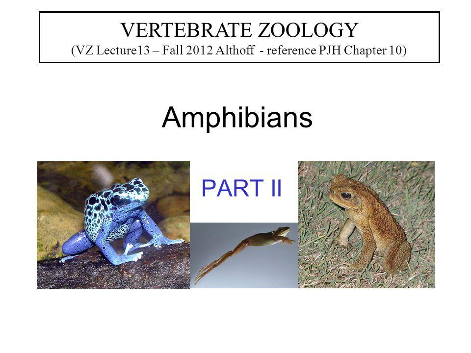 Classification of Amphibia CLASS Amphibia SUBCLASS Labryinthodonotia* Leposondyl* Lissamphibia ORDER Urodela Anura Gymnophiona * = extinct (salamanders) (frogs) (caecilians)