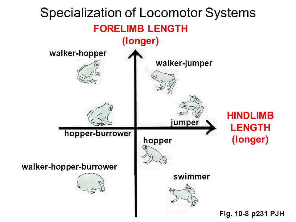 Specialization of Locomotor Systems Fig.