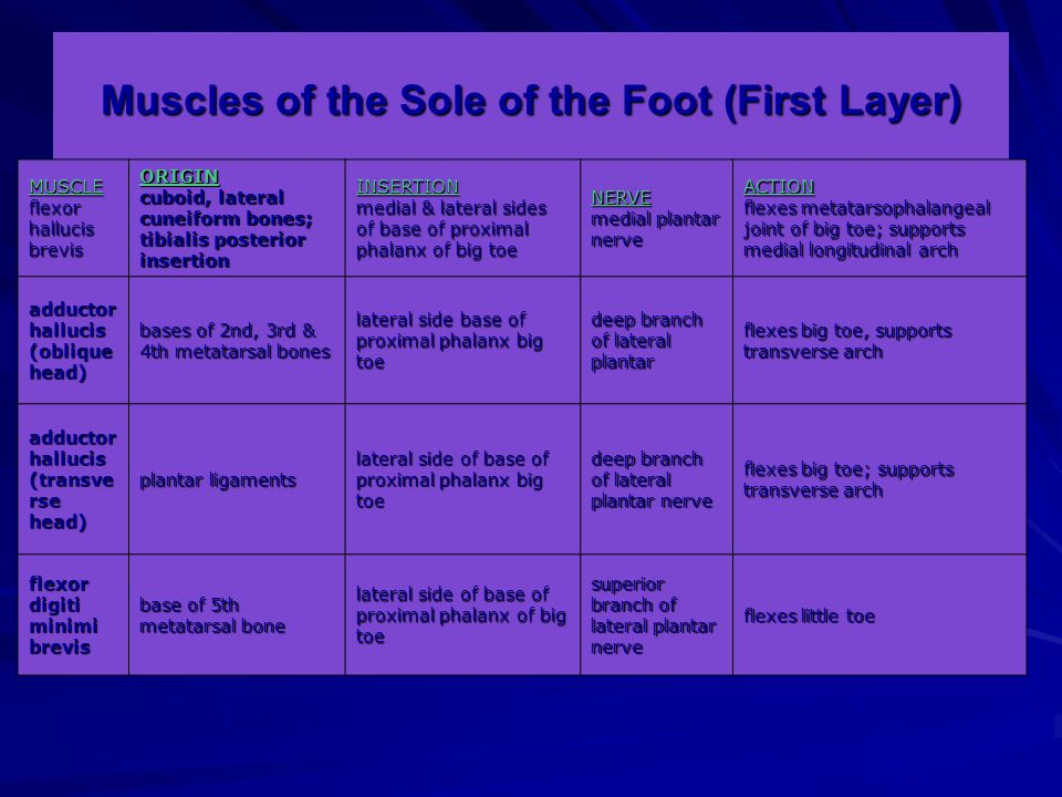 Muscles of the Sole of the Foot (First Layer) MUSCLE flexor hallucis brevis ORIGIN cuboid, lateral cuneiform bones; tibialis posterior insertion INSERTION medial & lateral sides of base of proximal phalanx of big toe NERVE medial plantar nerve ACTION flexes metatarsophalangeal joint of big toe; supports medial longitudinal arch adductor hallucis (oblique head) bases of 2nd, 3rd & 4th metatarsal bones lateral side base of proximal phalanx big toe deep branch of lateral plantar flexes big toe, supports transverse arch adductor hallucis (transve rse head) plantar ligaments lateral side of base of proximal phalanx big toe deep branch of lateral plantar nerve flexes big toe; supports transverse arch flexor digiti minimi brevis base of 5th metatarsal bone lateral side of base of proximal phalanx of big toe superior branch of lateral plantar nerve flexes little toe