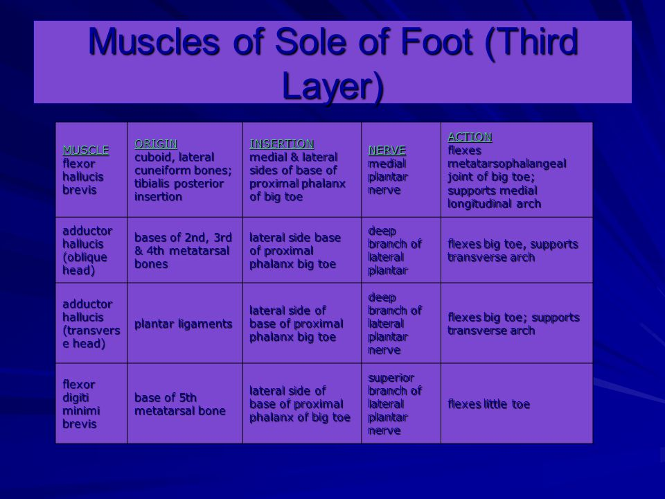 Muscles of Sole of Foot (Third Layer) MUSCLE flexor hallucis brevis ORIGIN cuboid, lateral cuneiform bones; tibialis posterior insertion INSERTION medial & lateral sides of base of proximal phalanx of big toe NERVE medial plantar nerve ACTION flexes metatarsophalangeal joint of big toe; supports medial longitudinal arch adductor hallucis (oblique head) bases of 2nd, 3rd & 4th metatarsal bones lateral side base of proximal phalanx big toe deep branch of lateral plantar flexes big toe, supports transverse arch adductor hallucis (transvers e head) plantar ligaments lateral side of base of proximal phalanx big toe deep branch of lateral plantar nerve flexes big toe; supports transverse arch flexor digiti minimi brevis base of 5th metatarsal bone lateral side of base of proximal phalanx of big toe superior branch of lateral plantar nerve flexes little toe