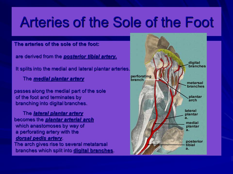 Arteries of the Sole of the Foot The arteries of the sole of the foot: are derived from the posterior tibial artery.