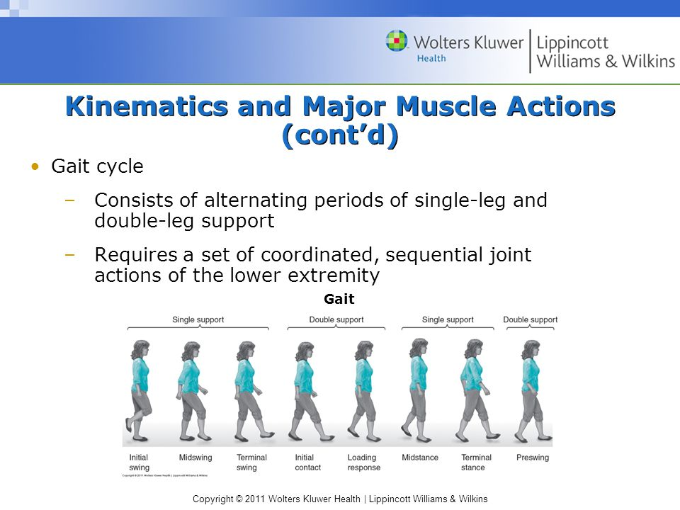 Copyright © 2011 Wolters Kluwer Health   Lippincott Williams & Wilkins Kinematics and Major Muscle Actions (cont'd) Gait cycle –Consists of alternating periods of single-leg and double-leg support –Requires a set of coordinated, sequential joint actions of the lower extremity Gait