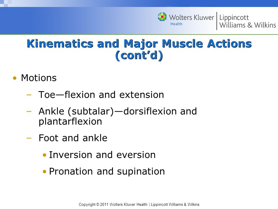 Copyright © 2011 Wolters Kluwer Health   Lippincott Williams & Wilkins Kinematics and Major Muscle Actions (cont'd) Motions –Toe—flexion and extension –Ankle (subtalar)—dorsiflexion and plantarflexion –Foot and ankle Inversion and eversion Pronation and supination